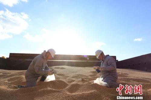 资料图:辽宁大窑湾检验检疫局工作人员对进口大豆进行查验。 闫善友摄