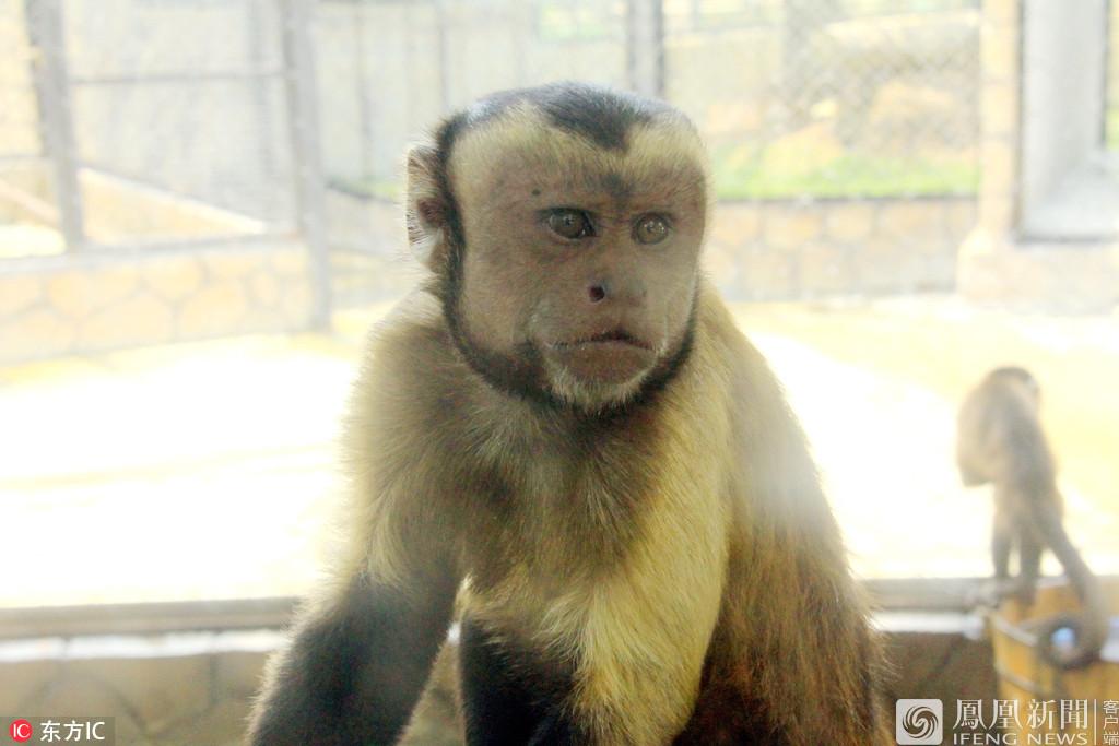 """动物园猴子长成""""人脸""""(图)"""