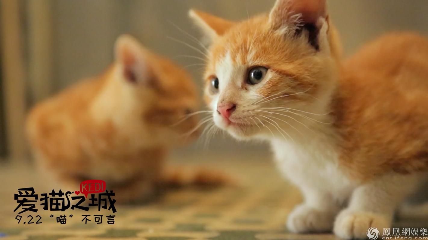 《爱猫之城》发暖心推广曲 俏皮《猫语》述心事
