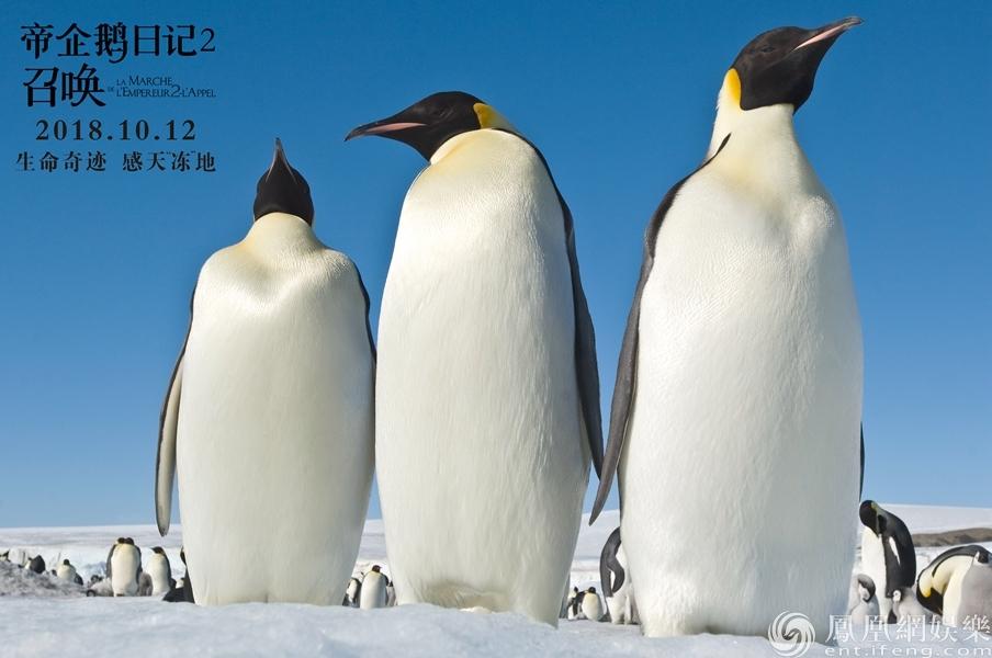 《帝企鹅日记2》定档10.12  经典震撼回归