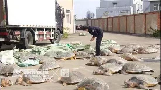非法收购128只冷冻海龟欲外销,10名犯罪嫌疑人被刑拘