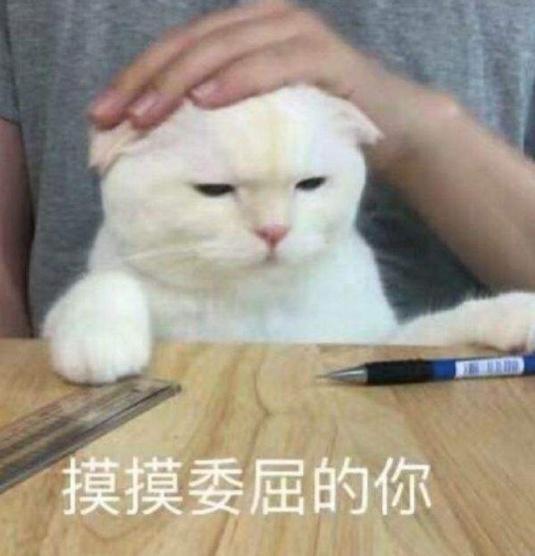 """浙大硕士毕业论文写吸猫:""""云吸猫""""是精神""""鸦片"""""""