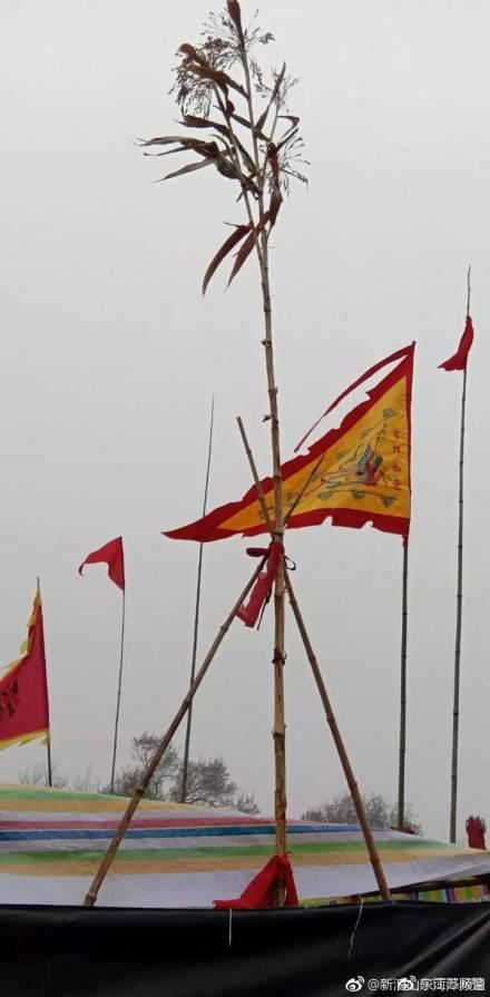 """饶平县地图:山东菏泽现5.7米""""神高粱""""引村民跪"""