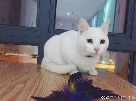 猫猫图片加文字大全可爱