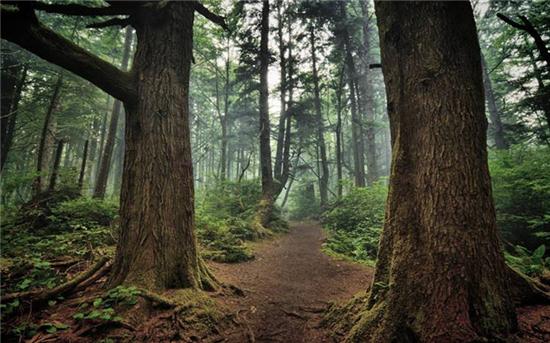 百年时光成就一木|安信黑胡桃地板,我贵我有理