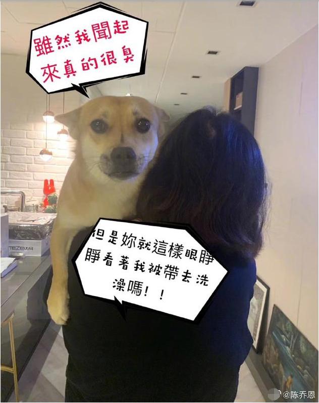 爱犬不愿洗澡被调侃狗随主人 ?#34385;?#24681;:我最爱泡澡