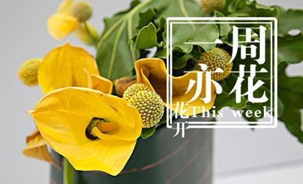 素绚花事推出2016年定制花艺服务