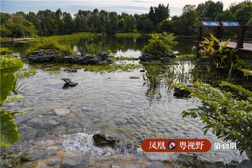 湿地一期注重将岭南水乡的本土文化特色融入湿地美景。