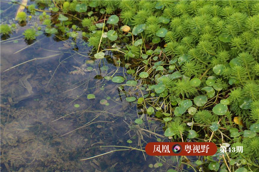 湖边植物兼顾植物多样性与观赏性。