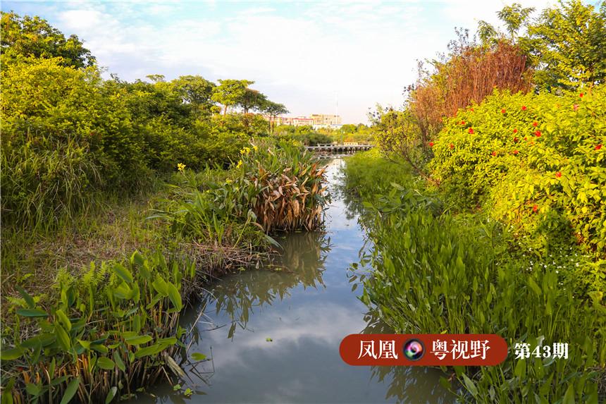 海珠湿地内河网交织,土地被划分成一块块碎片。正是这种可透水的地面,让湿地具备了强大的雨洪调蓄能力。