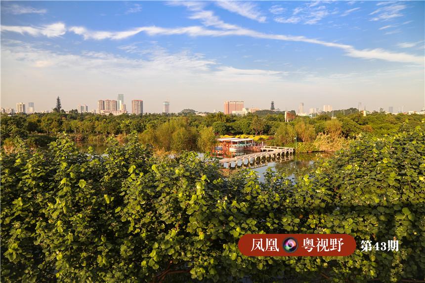 """广州人过去有句话:""""宁要河北一张床,不要河南一间房。""""海珠由农村到现代都市,发生了翻天覆地的变化。 图为:俯瞰海珠湿地。"""