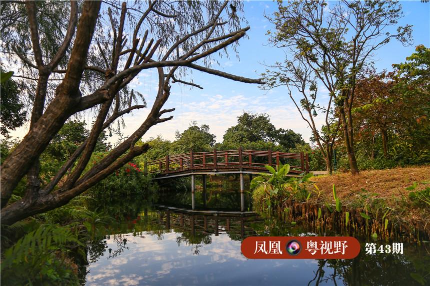 在这里,您可以漫步于湖畔柳荫,赏菊观荷,体验小桥流水的岭南水乡生活。