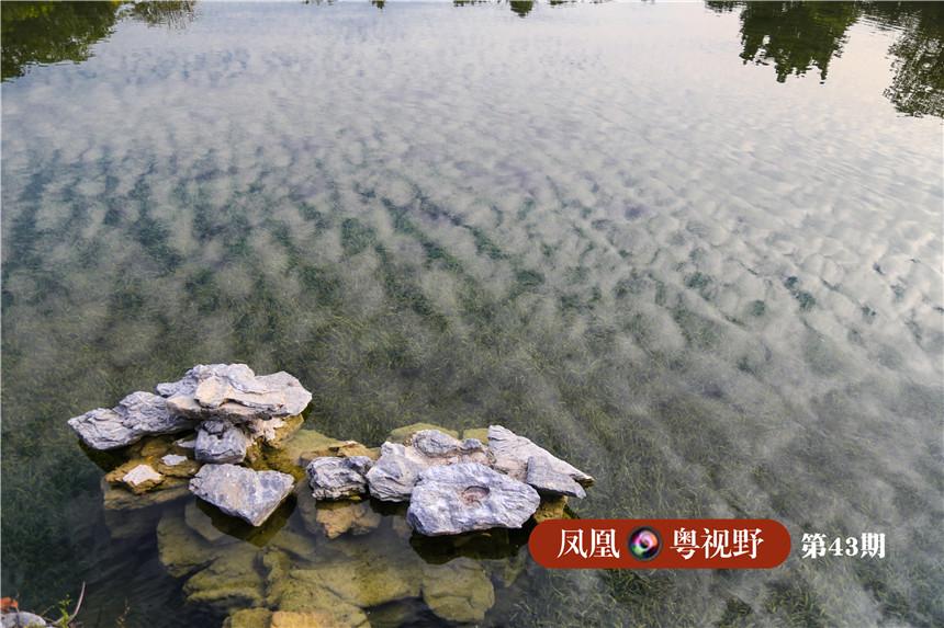 """工作人员介绍,水体的清晰归功于湖中的""""食藻虫""""。海珠湿地部分水域采用""""食藻虫控藻引导水体生态修复技术"""",在投放""""食藻虫""""控制藻类生长的同时,湖中的鱼类也以""""食藻虫""""为食,形成食物链健全的水下生态系统。"""