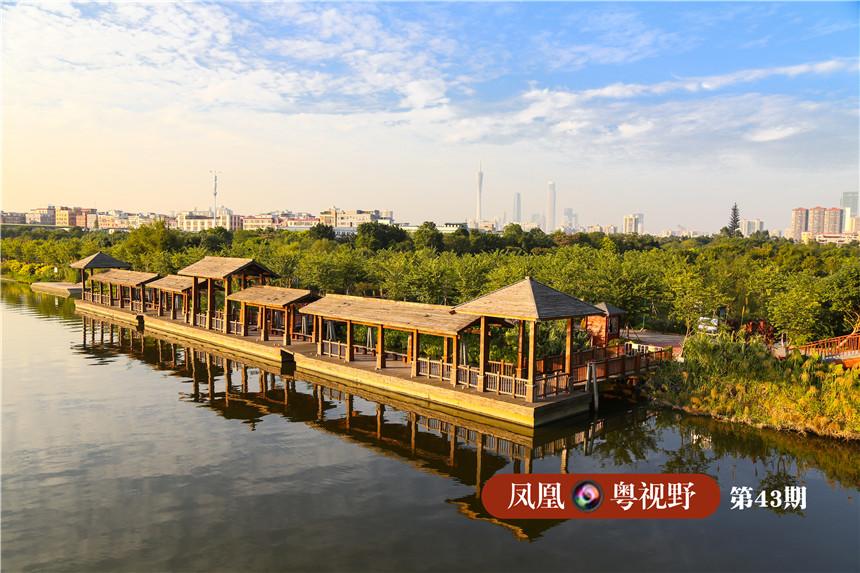 """海珠区古称""""江南洲"""",位于广州市的中部,是由珠江前后航道环绕的一个岛区,四面环江,是广州老四区当中唯一集江、涌、林、园为一体的生态区。 图为:海珠湿地位于广州新中轴线上,距离广州地标""""小蛮腰""""仅3公里,在海珠湿地高处俯瞰可见广州塔与CDB高楼。"""