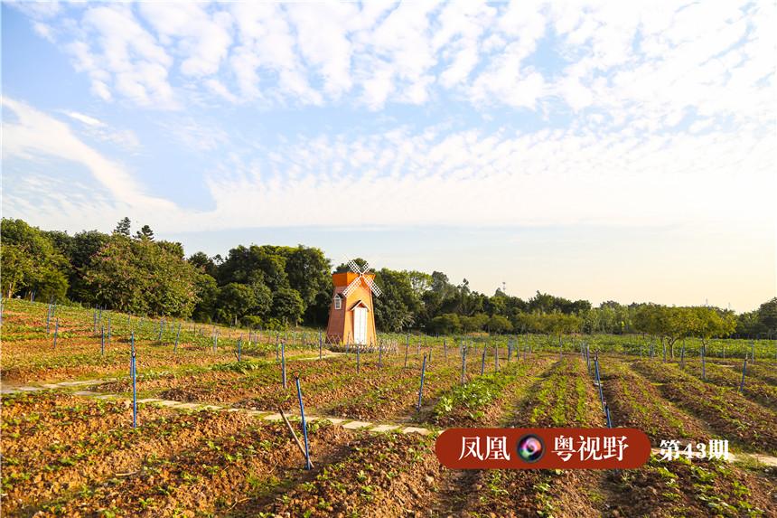 开设设计了湿地科普定向,自然大地美术和城市农耕体验等课程.