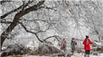 黑龙江等地现雾凇美景 银装素裹玉树琼枝