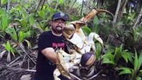实拍澳洲发现巨型生物 犹如螃蟹蜘蛛合体攀爬上树