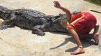 男子徒手搏斗巨鳄 头反被鳄鱼一口咬住...