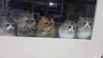 4只小猫神同步盯猫棒 还有一只在想啥