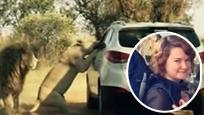 女剪辑师在狮子园摇下车窗 下一秒竟被母狮活活咬死
