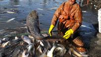 实拍男子河中钓鱼 一招直接捕获千条