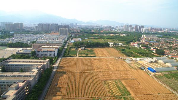 """山东农业大学:开启""""收麦""""时刻"""