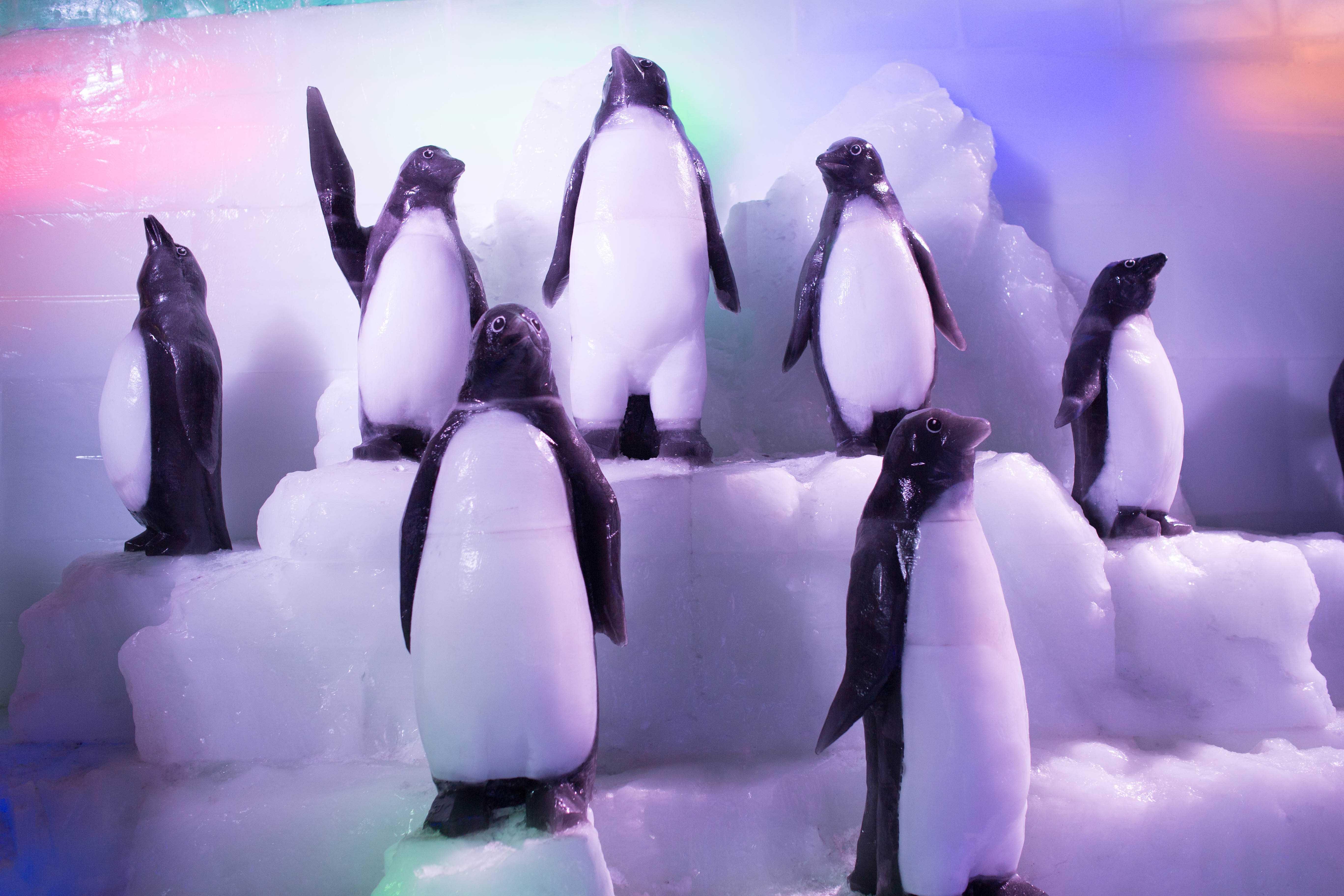 动物 海报 企鹅 5472