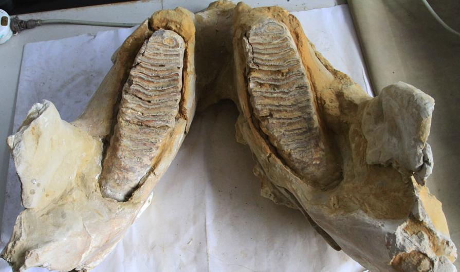 石器及动物骨骼