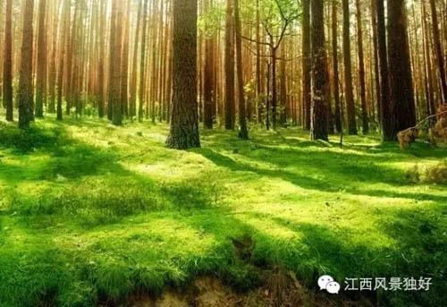 竟然隐藏着6大森林 秘境图片