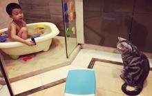 姚晨儿子洗澡都要带上爱猫……