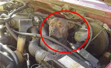 车主发现汽车启动不了 检查发动机把他吓坏了!