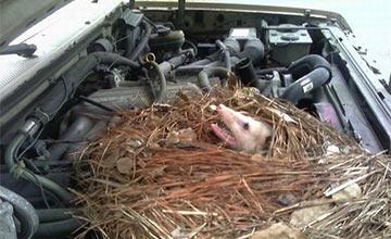 一女子的小轿车传来怪异的响声 打开一看给吓懵了!