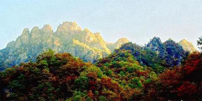 秋上枝头红河南 赏红模式全面开启 走进老界岭