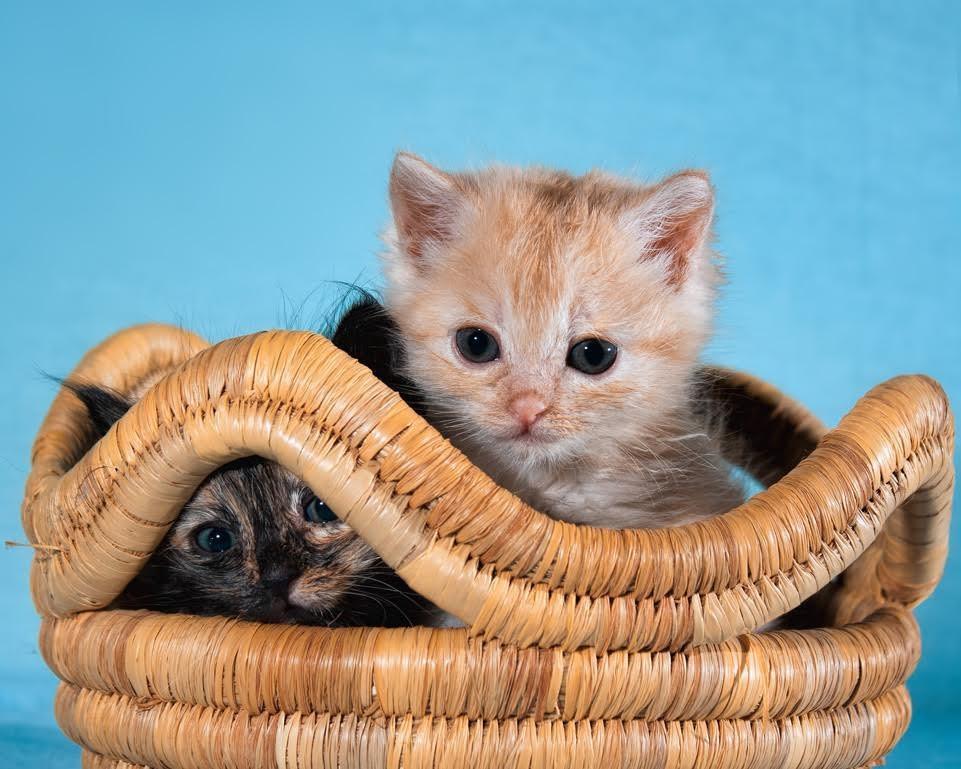 流浪猫征服老人疗养院 孤独的心从此彼