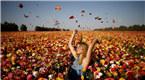 以色列毛茛花盛开 游客徜徉花海享受阳光