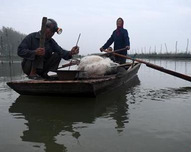 洪泽湖上即将消失的捕鱼绝活