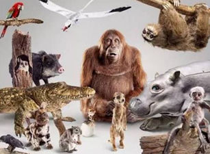 [TV哔]厉害!34个动物卧底,偷窥了整个动物界