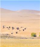 天鹅湖旁 看腾格里沙漠最美秋色