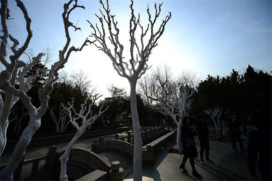 """济南""""白树林"""" 原是越冬保护衣"""