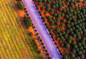 春色满园 航拍江西新余现代农业基地如童话世界