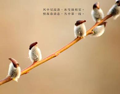 枝头报春鸟
