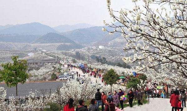 资讯  除了西安市,汉中,安康,商洛等地都有许多著名的赏花之处,您可