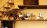 喵星人是世界上最戏剧性的动物