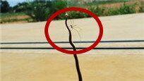 蜘蛛大战2米长棕蛇 结局令所有人惊讶