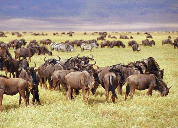 全球野生动物40年减一半 1.6万种动植物濒临灭绝 - 梅思特 - 你拥有很多,而我,只有你。。。