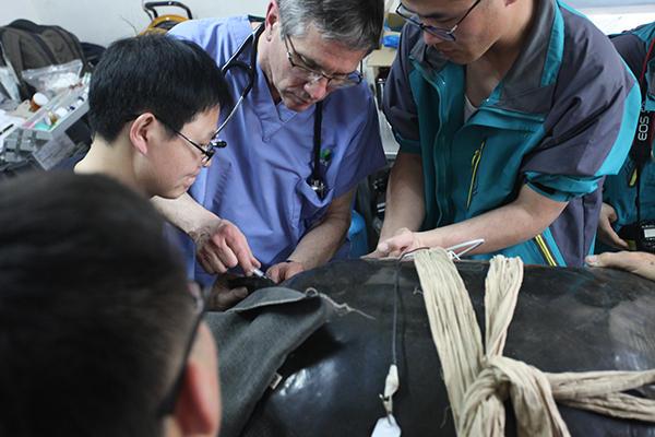 中华巨鳖全世界仅存3只 苏州动物园饲养了1对