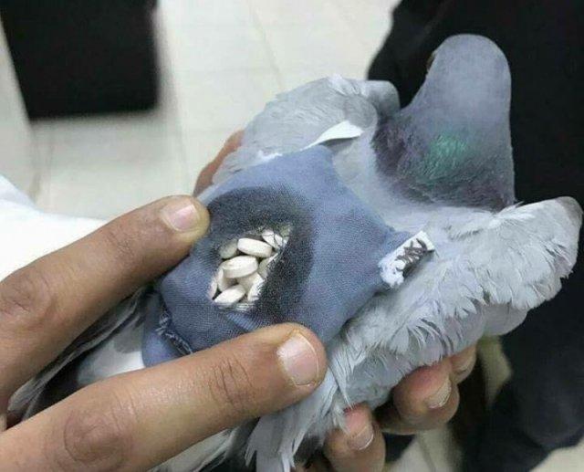 信鸽背包裹被抓 包内藏近两百粒毒品 - 天在上头 - 我的信息博客