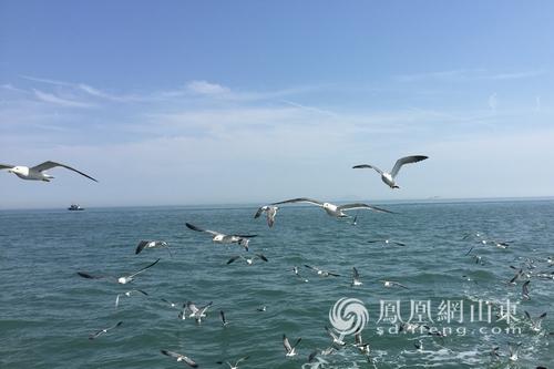 2017山东海洋生态文明建设专家行在长岛启动