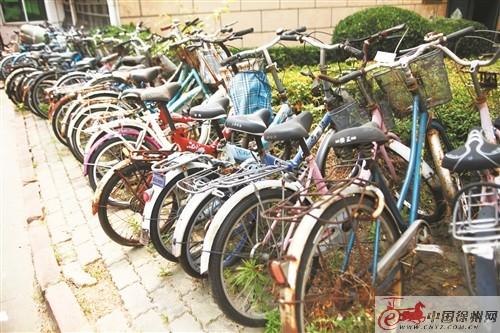 中国徐州十大蛇有哪些