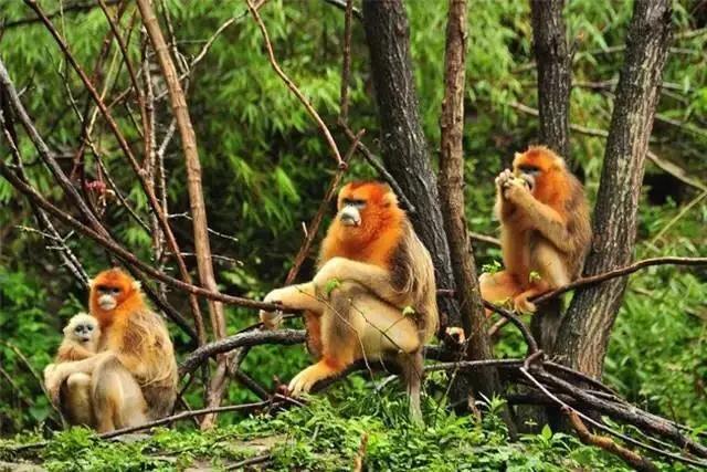 秦岭山中的绝美景致--佛坪国家自然保护区